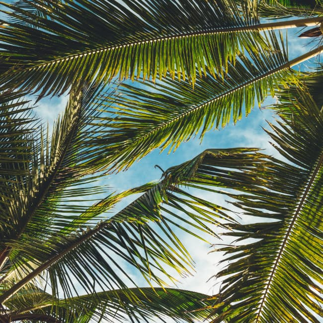 Palm fronds in front of a blue sky